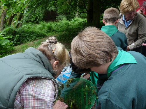 Pond dipping at Oxbow Lake (Image) - The Friends of Ponteland Park