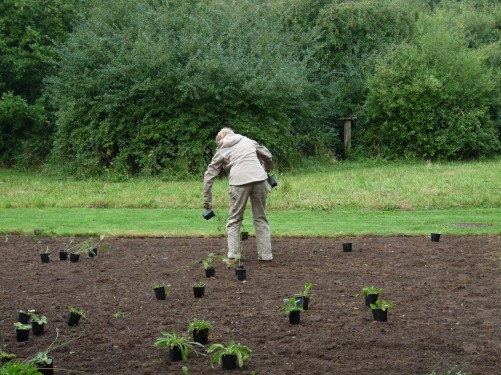 Wildflower meadow planting (Image) - The Friends of Ponteland Park