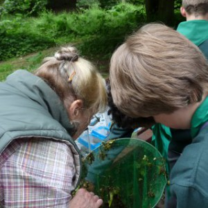 Pond dipping at Oxbow Lake - Ponteland Park