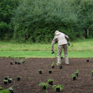 Wildflower meadow planting - Ponteland Park