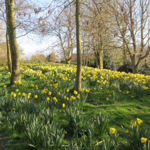 Marie Curie Garden of Hope - Ponteland Park